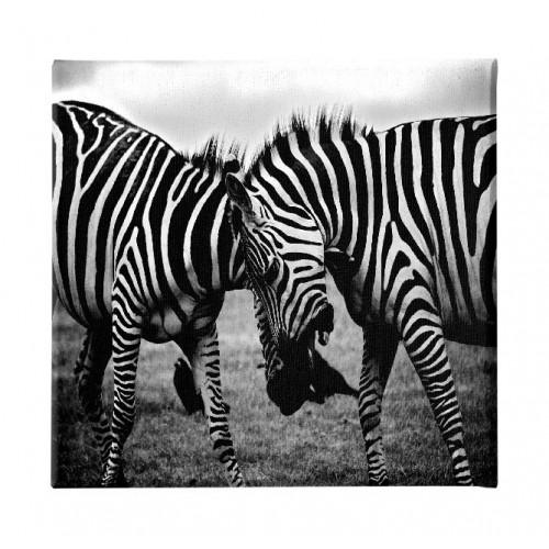 HM20KNV60x60-262 - Quadro Zebra...