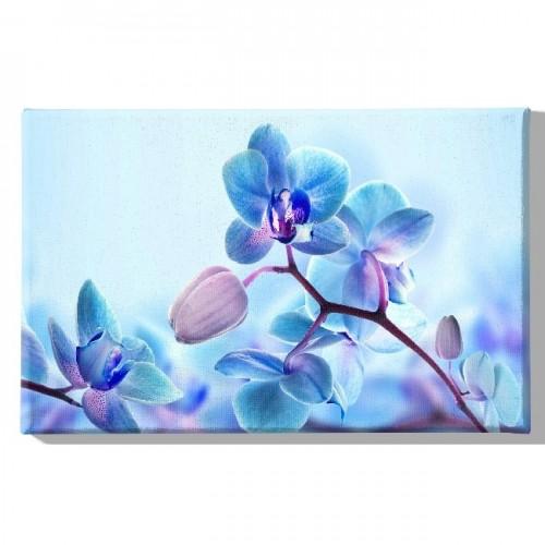 HM20KNV45x70-203 - Quadro Flowers...